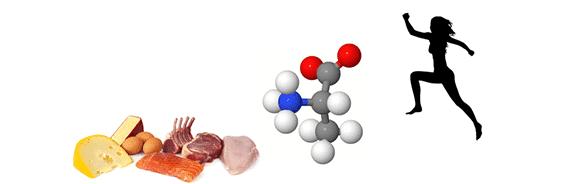 Definierter werden mit Proteinen…Personal Trainer Hamburg Fit4TheGame