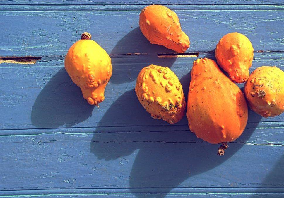 3 heilsame Nahrungsmittel, die euch aktiv & schützend durch den Herbst begleiten können